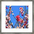 Pinks And Blues Framed Print