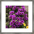 Hedgehog Cactus And Yellow Daisies Framed Print
