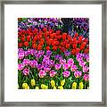 Hidden Garden Of Beautiful Tulips Framed Print