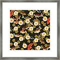 Koi And Lily Pads In Dark Water Framed Print