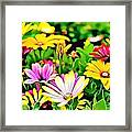 Naturalness And Flowers 35 Framed Print