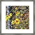 Phoenix Arizona Papago Park Blue Sky Red Rocks Scrub Vegetation Yellow Flowers 3182019 5327 Framed Print