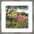 Phoenix Botanical Gardens Framed Print