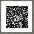 Plant Black And White Abstract Framed Print