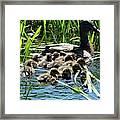 Proud Mother Duck Framed Print