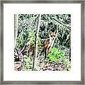 Red Fox In The Woods Framed Print