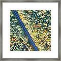 Road Through Colorful Autumn Forest Framed Print