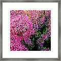 Spring Flowers In Garden Framed Print