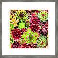 Succulent Garden Framed Print