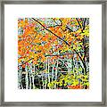 Sugar Maple Acer Saccharum In Autumn Framed Print
