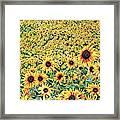 Sunflowers In Kansas Framed Print