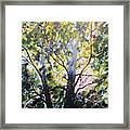 Sycamore Inspiration Framed Print