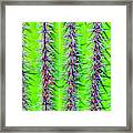 The Spines Of The Cactus Framed Print
