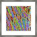 Tree Trunk Abstract Framed Print