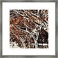 Treelined Framed Print