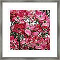Washington State Magnolia Framed Print