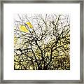 Wasteway Willow 18 Framed Print