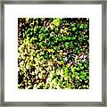 What Shade Of Green Framed Print