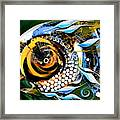 White Headed Mouth Fish Framed Print
