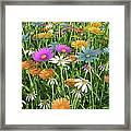 Wildflower Meadow, Artwork Framed Print