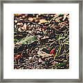 Witch's Hat Mushrooms Framed Print