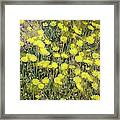 Yellow Meadow Framed Print