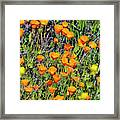 Yellow Poppies Of California Framed Print