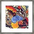 Wings Of California Framed Print