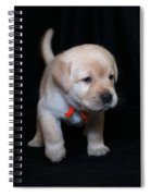 4 Week Old Lab Puppy Spiral Notebook
