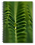 A Green Drop Spiral Notebook