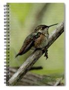 A Little Tired Hummingbird Spiral Notebook