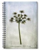 Aethusa Cynapium Spiral Notebook