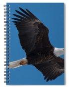 Bald Eagle In Flight 6 Spiral Notebook
