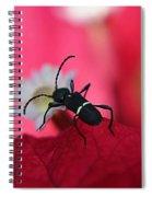Black Bug Spiral Notebook