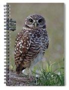 Burrowing Owls - Watching You 3 Spiral Notebook