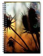 C Est La Vie Sunset Spiral Notebook