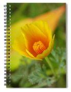 California Poppy In Autumn  Spiral Notebook