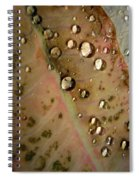 Clear Drops Spiral Notebook