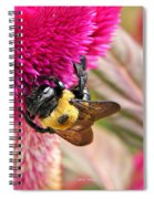 Cockscomb And Bumble Bee Spiral Notebook