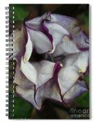Datura Metel Spiral Notebook