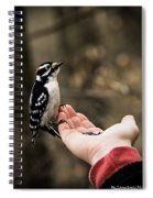 Downy Woodpecker In Hand Spiral Notebook