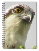 Eye Of The Osprey Spiral Notebook