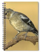 Female Chaffinch Spiral Notebook