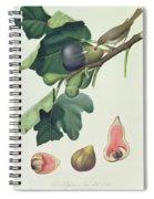 - Fico Fetifero And Fico Dell Osso Spiral Notebook