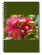 Flowering Gum W Ants Spiral Notebook