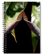 Husk Spiral Notebook