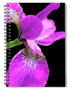 Japanese Iris Violet Black  Spiral Notebook