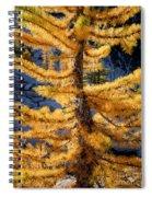 Larch Tree Closeup Spiral Notebook