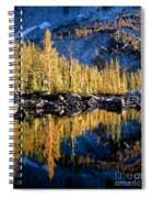 Larch Tree Reflection  Spiral Notebook