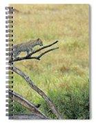 Leopard Cub In Serengeti Spiral Notebook